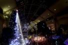 52万盏灯饰装点22米高圣诞树 澳大利亚圣诞树创纪录